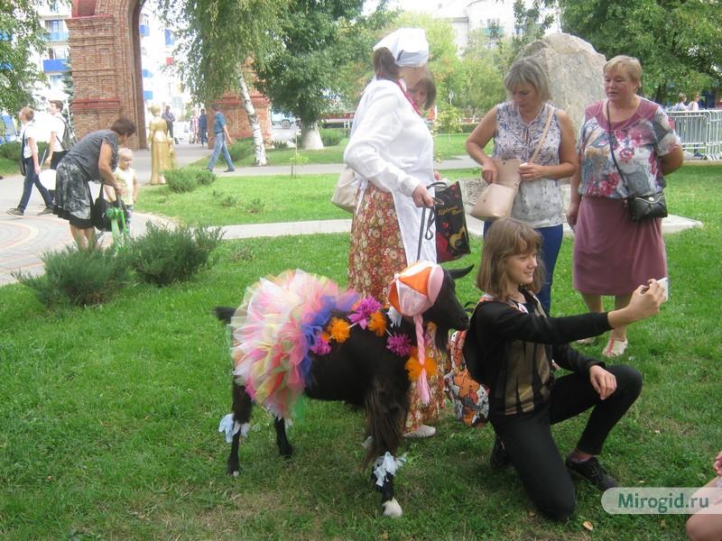 Конкурс красоты среди коз, г.Урюпинск
