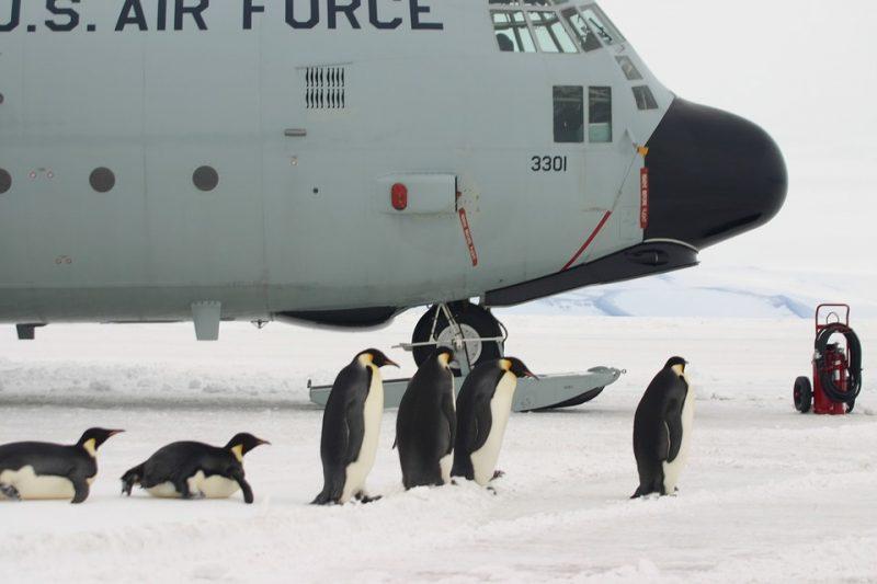 Как попасть в Антарктиду