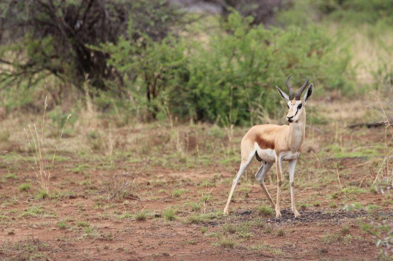 Красивейшая природная достопримечательность ЮАР: национальный парк Пиланесберг